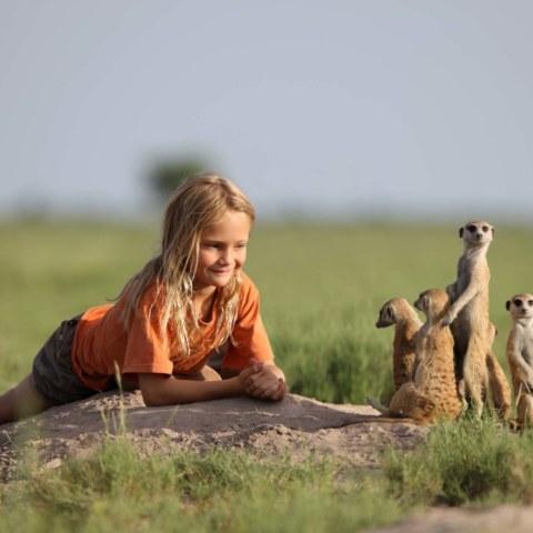 meerkat-Horst-HR